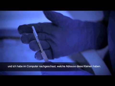 Wie viel Sie trinken können Tabletten von Diabetes