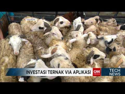 Video Investasi Ternak Domba dan Lele via Aplikasi Smartphone