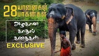 யானை அதிக அன்புள்ள ஒரு முட்டாள்! | A Day With Elephant