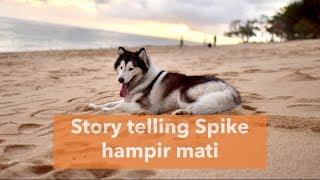 Video Spike SAKIT HAMPIR MATI ..... MP3, 3GP, MP4, WEBM, AVI, FLV September 2019