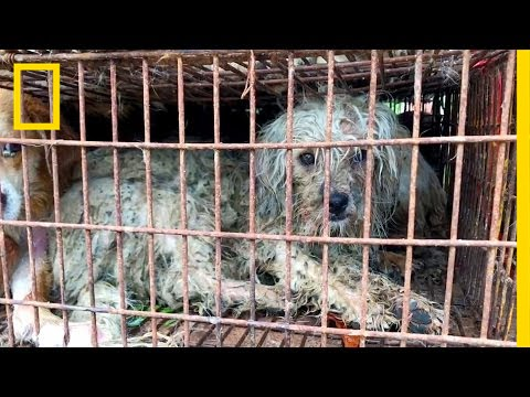 Dog Meat Sales Continue at Chinese Festival Despite Expected Ban (GRAPHIC) | National Geographic