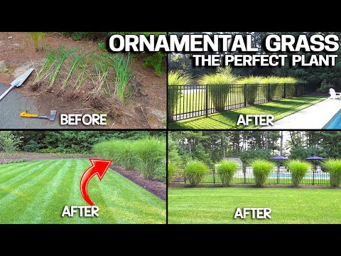 Growing Ornamental GRASS Plants - Hardiest Plant Ever & EASY