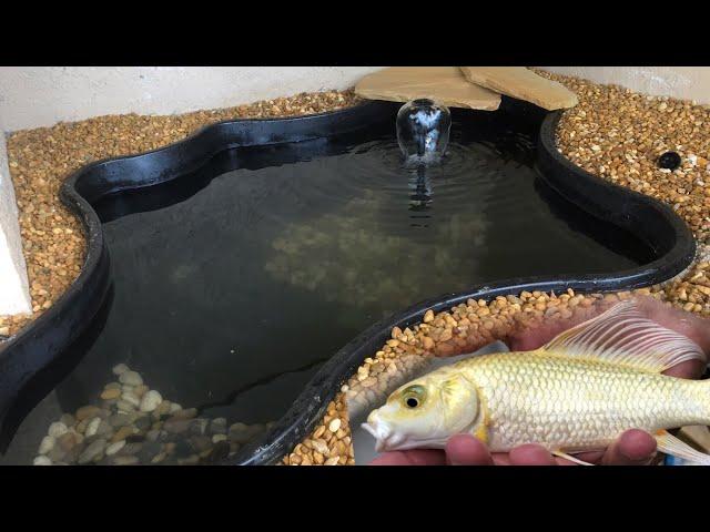 New KOI Pond For OUR Awesome Platinum Koi