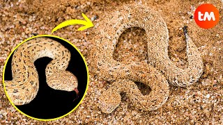 10 SNAKES With INCREDIBLE CAMOUFLAGE 🐍