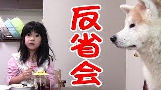 秋田犬 惣右介 子供と反省会