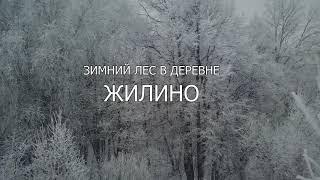 Зимний лес в Жилино
