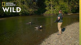 Two Eagles Take a Bath | Alaska Animal Rescue