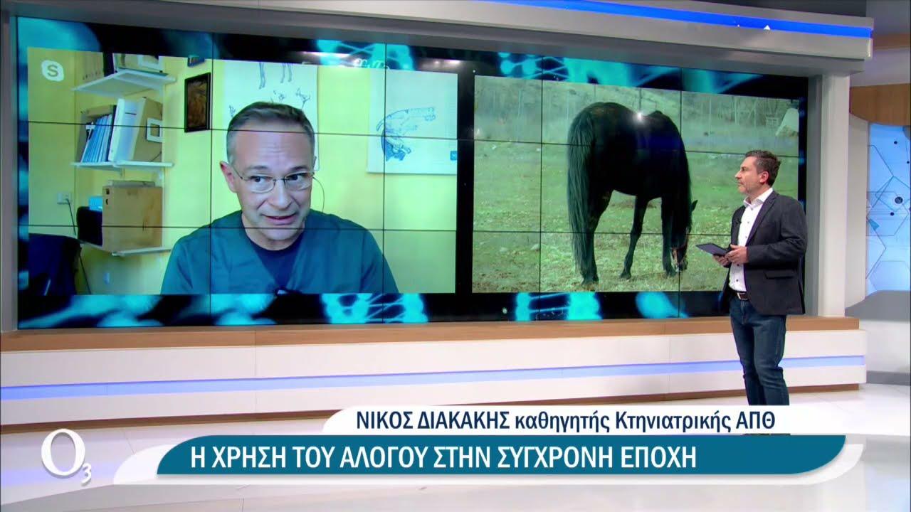Οι φυλές των αλόγων που ζουν στην Ελλάδα | 31/03/2021 | ΕΡΤ