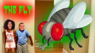 THE FLY vs Shiloh and Shasha! - Onyx Kids