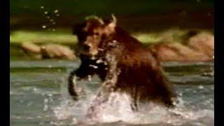 Fluke   Trailer (1995)