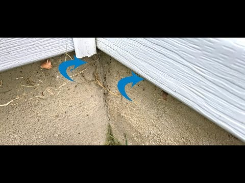Warm weather is here and that means ants are emerging from a long, deep slumber and are searching for food. What better place to find food than your home? Just ask this homeowner in Manasquan, NJ who had pavement ants all along the exterior of his property. His was lucky none of the ants breach his home! As we began our inspection we discovered multiple locations where the ants were trailing up the foundation. A closer inspection revealed that these ants were pavement ants.