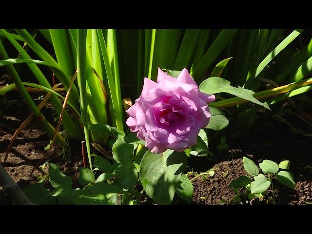 Где живут самые дружные садоводы?