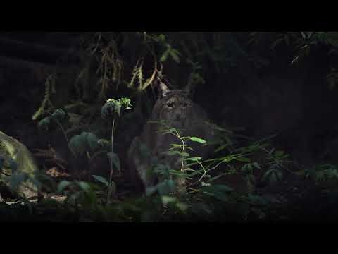 En kort film om lodjuret