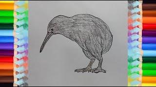 How To Draw A Kiwi Bird Step By Step - Easy Animals To Draw