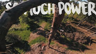 Epic Forest Parkour with 6s Power! - FPV Freestyle