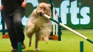 animales competencia con perros
