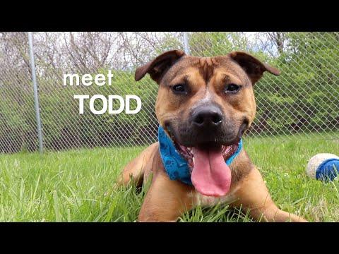 Todd, an adopted German Shepherd Dog & Terrier Mix in Kansas City, KS