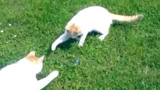 Jokes with cats. Funny Video About Cats | Приколы с Кошками. Смешное Видео Про Котов