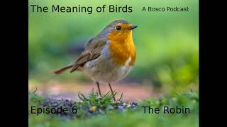 The Robin - The Meaning of Birds episode 6