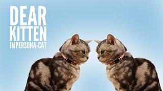 Dear Kitten: Impersona-cat