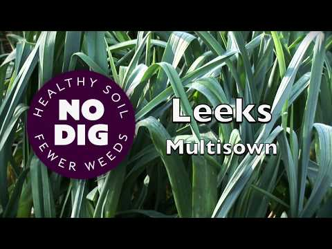 , title : 'Grow leeks from multisown modules: quicker, cheaper, easier, high yield