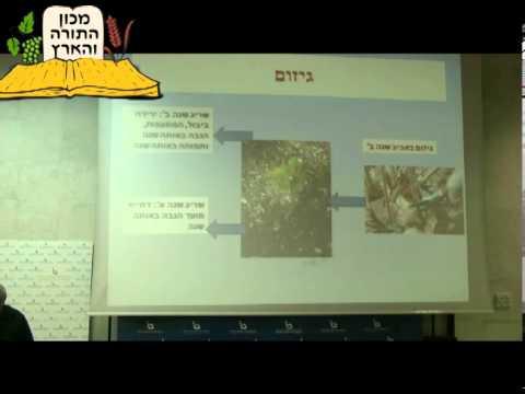 """ד""""ר שמואל זליכה - פטל אוסנה ואוכמניות"""