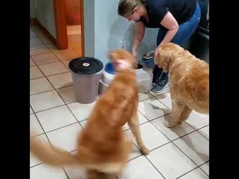 Vanhan koiran ruokinta vs. nuoren koiran ruokinta :3