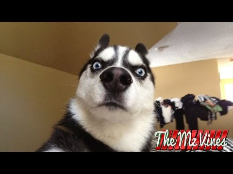 Best Funny Dog Vines 2018 | PART 1
