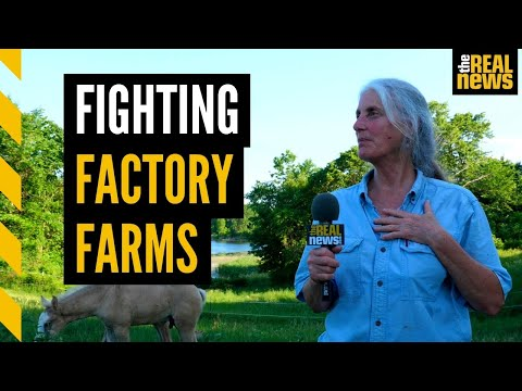Factory farms pose an 'existential threat' for rural Wisconsin communities