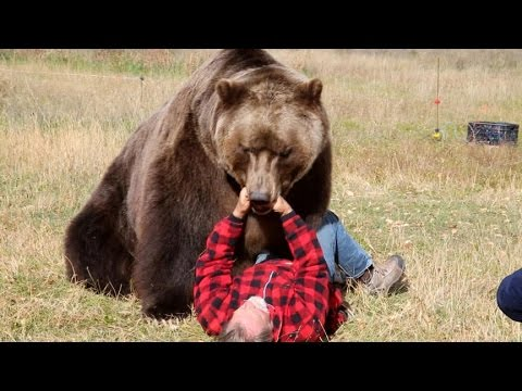How to Survive a Bear Attack (Episode 1) | Good Morning America | ABC News