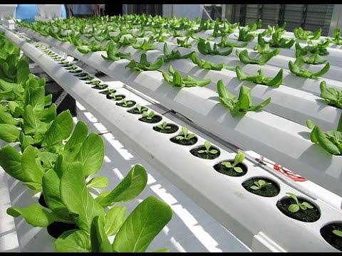 Nft hydroponic system Trinidad on Grow Aquaponically