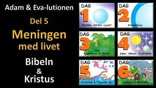 Thumbnail for video: Adam och Eva-lutionen Del 5: Meningen med livet (Bibeln & Kristus)