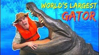 WORLD'S LARGEST ALLIGATOR CAUGHT AT GATORLAND FLORIDA | Orlando Vlog