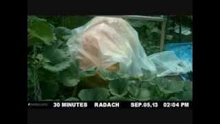 Giant Pumpkin Time Lapse