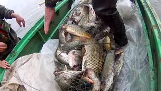 Про рыбалку ловля сазана о рыбалке