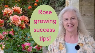 Growing roses - expert tips on choosing and caring for roses