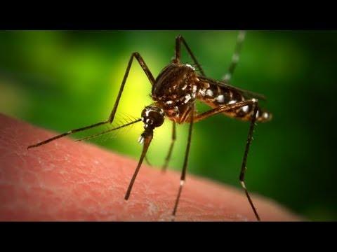 Как сделать фумигатор от комаров за 5 минут своими руками (В сети не оставлять без присмотра!!!)