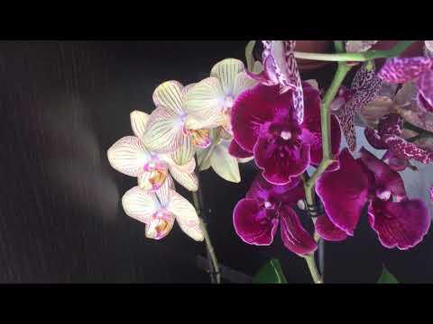 УРА)))) Сбылась заветная МЕЧТА. ПЕРЕЕЗД. Потери орхидей при транспортировке