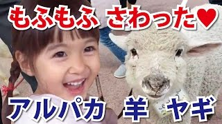 栃木観光におすすめの牧場可愛い動物達がお出迎え♪那須りんどう湖レイクビュー1入場前編