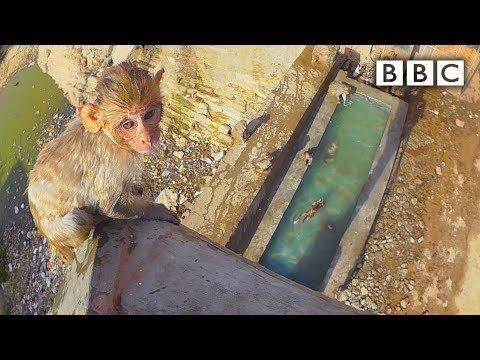 Malý makak se učí plavat a skákat do vody
