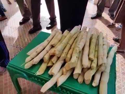 Sugarcane Juice Extractor CanePro Ace