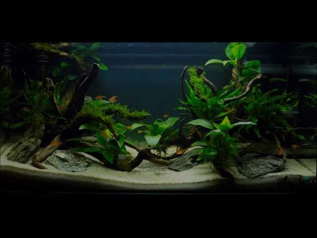 Easy Aquascaping