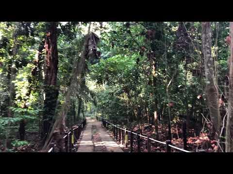 A walk through the new Thomson Nature Park