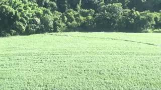 Na manhã deste sábado (18/01), a equipe do Falcão 07 foi acionada para prestar apoio a 4CIPM, na buscas por duas caminhonetes que haviam sido roubadas nesta madrugada, em Londrina. Após buscas em conjunto com as equipes de solo, foram localizados os veícu
