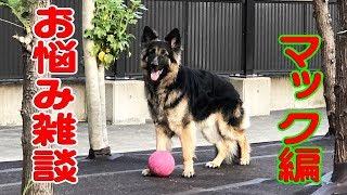 シェパード犬の無駄吠えに愚痴る警備厳しいねGerman Shepherd Dog