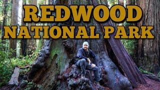 Redwood National Park | Jedediah Smith State Park | Stout Grove