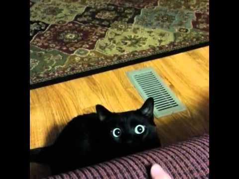 Black Cat's Eyes Dilate!
