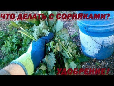 Удобрение из сорняков / Как использовать  сорняки на участке? / Сад и огород