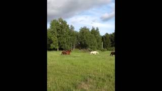 Horses running through meadow