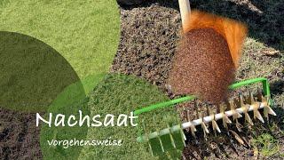 Rasen richtig nachsäen l Nachsaat l Rasen nach vertikutieren nachsäen l Teil 1/6 l nachhaltig Grün